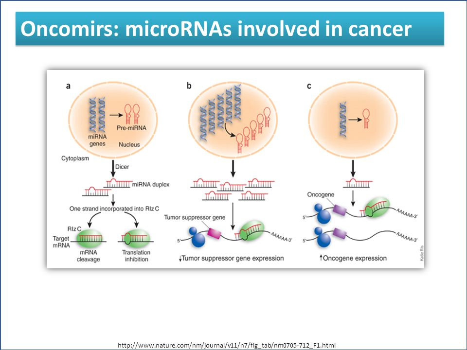 miRNA expression deregulation found in different types of cancer such as: miRNA expression deregulation found in different types of cancer such as: miRNAs leukemialymphomascolonorectalbreast Oncomirs: microRNAs involved in cancer http://www.nature.com/nm/journal/v11/n7/fig_tab/nm0705-712_F1.html