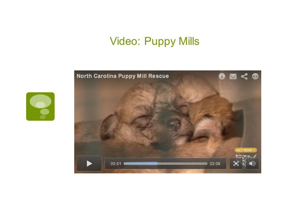 Video: Puppy Mills