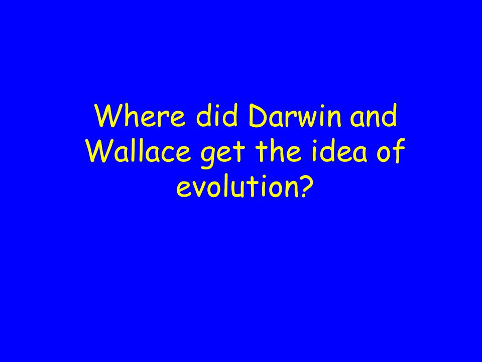 Alfred Russel Wallace (1823-1913) Presented a paper with identical ideas as Darwin on July 1, 1858 at the Linnaean Society meeting Was a botanist who