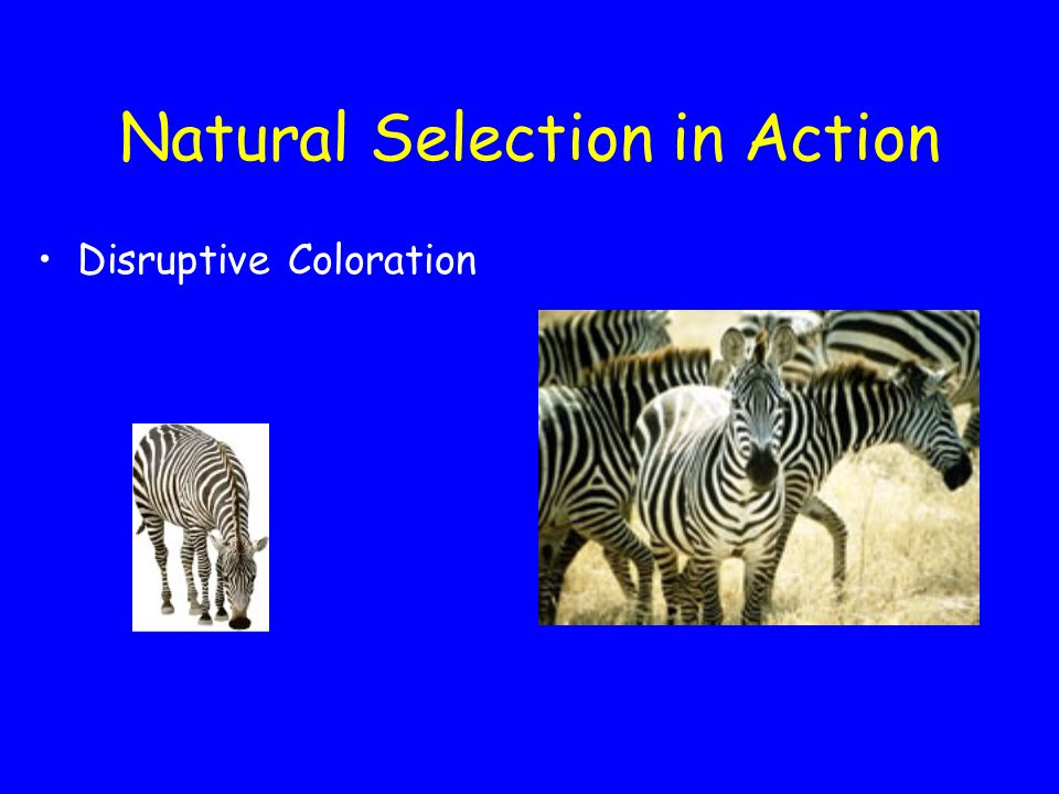 Natural Selection in Action Warning Coloration