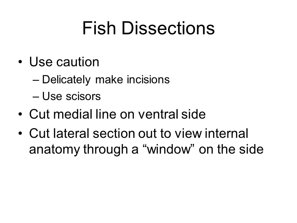 Short guide to fish dissection Remove gill arches –Pharyngeal Teeth –Gill Rakers –Gill lamellae Remove a section of scales –Examine under compound microscope (Aging organisms) Examine musculature –hypaxial/epaxial muscles Examine mouth structure Track digestive system –Identification of parts –Compare and examine fish with respect to digestive tract complexity and length Heart and circulatory structure Misc.