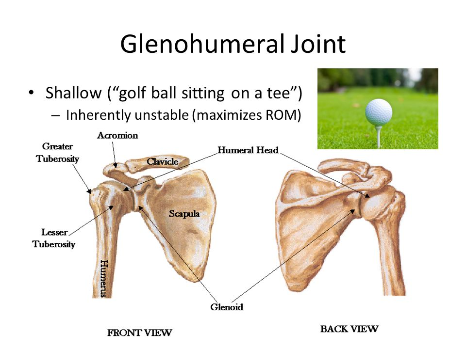 Glenohumeral Joint Shallow ( golf ball sitting on a tee ) – Inherently unstable (maximizes ROM)