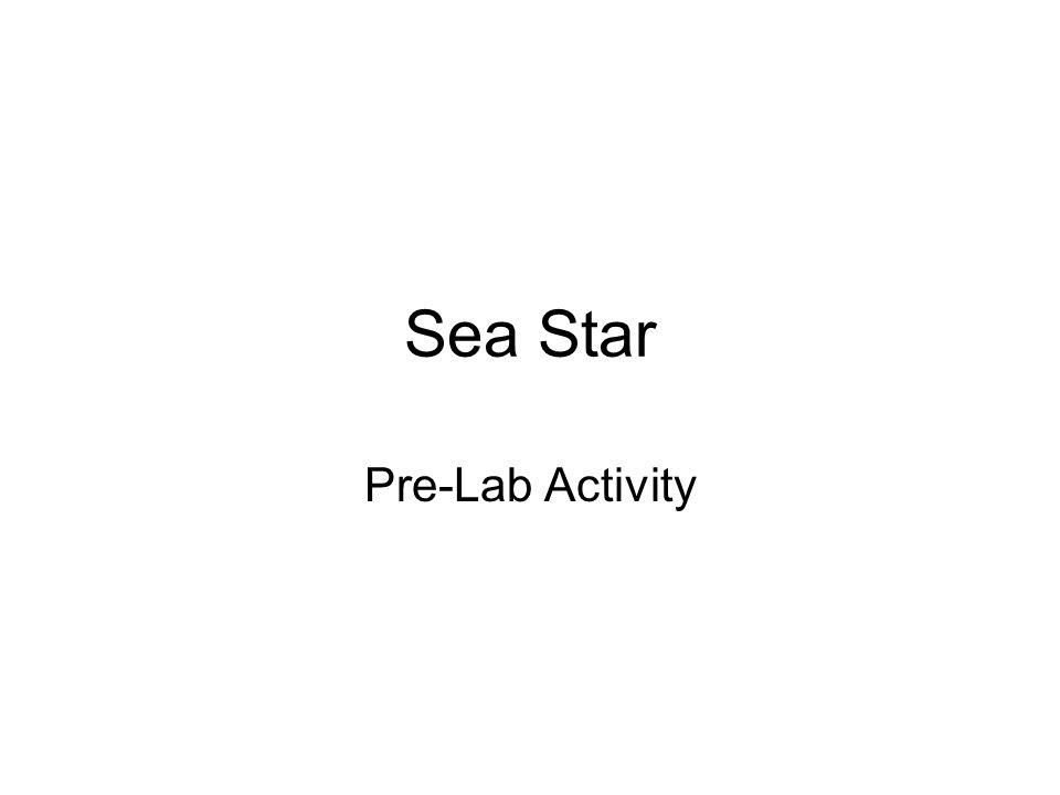 Sea Star Pre-Lab Activity