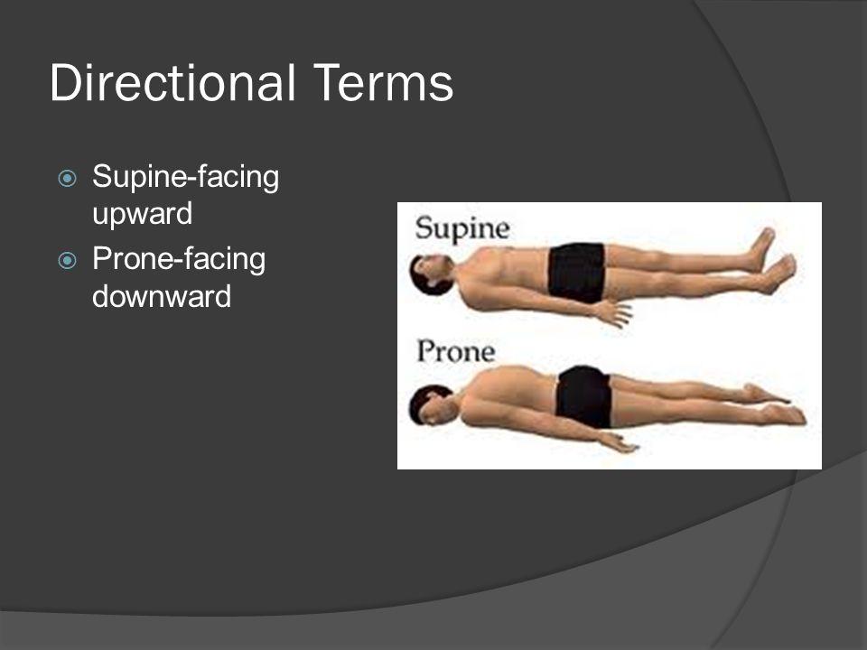 Directional Terms  Supine-facing upward  Prone-facing downward