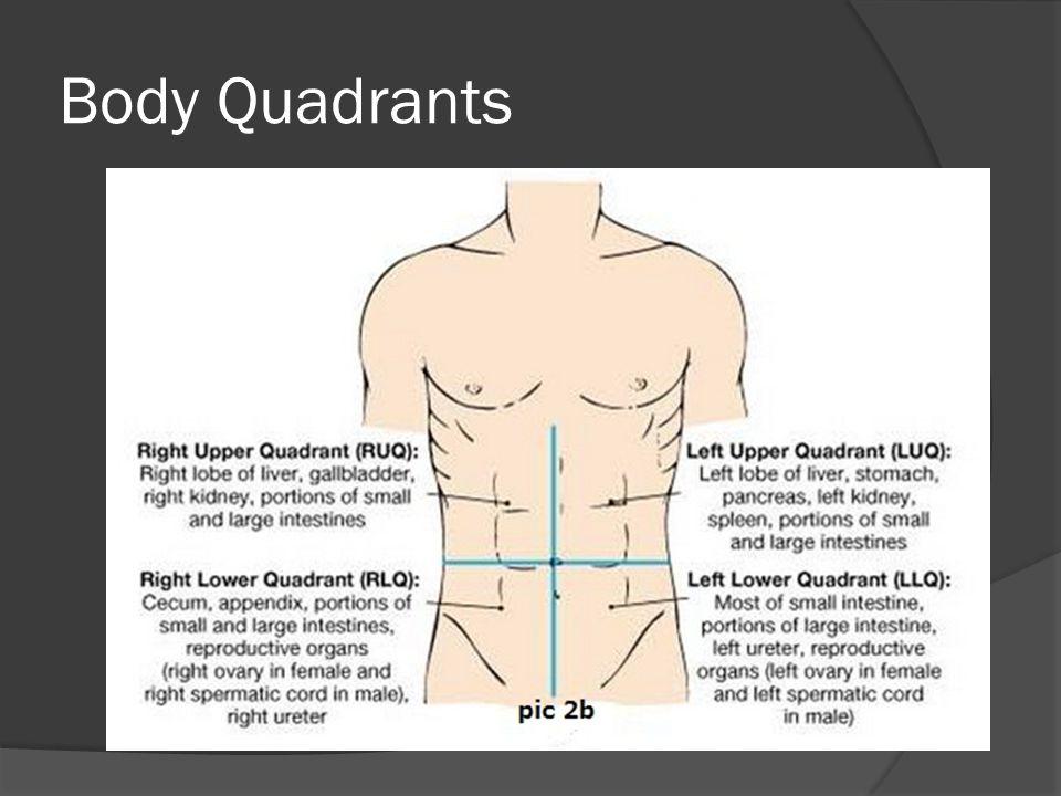 Body Quadrants