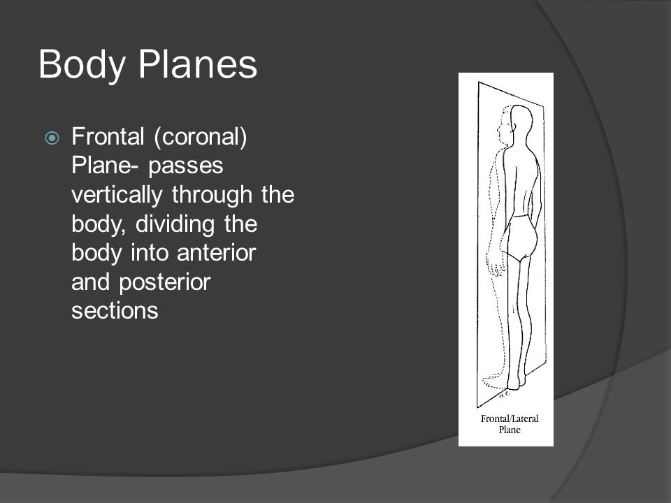 Body Planes  Frontal (coronal) Plane- passes vertically through the body, dividing the body into anterior and posterior sections