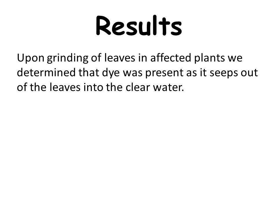 Results Upon grinding of leaves in affected plants we determined that dye was present as it seeps out of the leaves into the clear water.