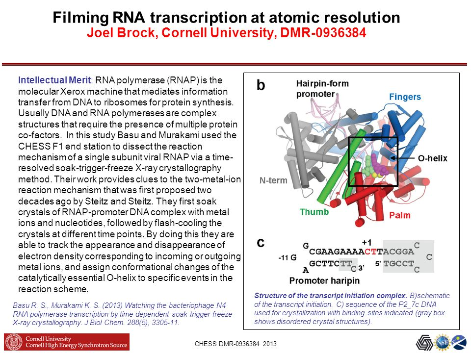 CHESS DMR-0936384 2013 Filming RNA transcription at atomic resolution Joel Brock, Cornell University, DMR-0936384 Structure of the transcript initiation complex.