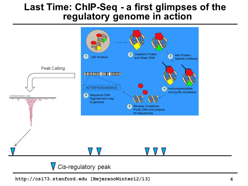 Gene transcription start site SRF binding ChIP-seq peak Ontology term (e.g.