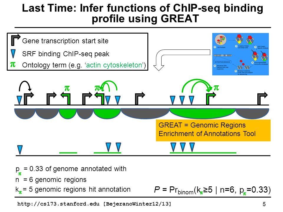 http://cs173.stanford.edu [BejeranoWinter12/13] 6 GREAT gives you a tables of functions Ontology Term # Genes Binomial Experimental P-value support * Gene Ontology actin cytoskeleton actin binding 7x10 -9 5x10 -5 Miano et al.