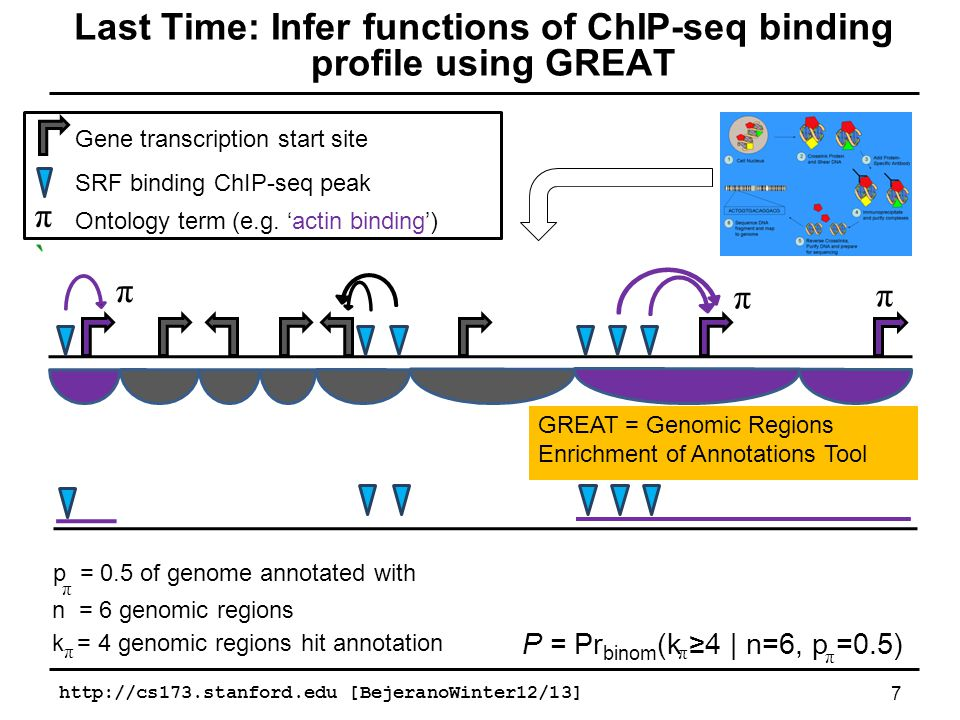 Transcription factorOntologyTop-ranked biological contextGREAT rank for ChIP-seqExperimental support GABPAGO Biological Processtranslation2(Genuario and Perry, 1996) GO Cellular Componentmembrane coat14Novel GO Molecular Functiontranslation initiation factor activity4(Genuario and Perry, 1996) Mouse Phenotypesincreased single-positive T cell numberNone(Yu et al., 2010) PANTHER Pathwaygeneral transcription by RNA polymerase I1(Hauck et al., 2002) Pathway Commonstranscription3(Hauck et al., 2002) REST (NRSF)GO Biological Processneurotransmitter transport1(Schoenherr et al., 1996) GO Cellular Componentneuronal cell bodyNone(Schoenherr et al., 1996) GO Molecular Functioncation channel activity1(Schoenherr et al., 1996) Mouse Phenotypesabnormal synaptic transmission1(Schoenherr et al., 1996) PANTHER Pathwaysynaptic vesicle trafficking2(Schoenherr et al., 1996) Pathway Commonstransmission across chemical synapses3(Schoenherr et al., 1996) SRFGO Biological Processmuscle structure developmentNone(Miano et al., 2007) In JurkatGO Cellular Componentactin cytoskeleton1(Miano et al., 2007) GO Molecular Functionstructural constituent of muscleNone(Miano et al., 2007) Mouse Phenotypesdilated heart ventriclesNone(Parlakian et al., 2004) PANTHER Pathwaycytoskeletal regulation by Rho GTPaseNone(Hill et al., 1995) Pathway Commonsregulation of insulin secretion by acetylcholineNoneNovel STAT3GO Biological Processnegative regulation of signal transductionNone(Naka et al., 1997) In mESCGO Molecular Functiontransforming growth factor beta bindingNone(Kinjyo et al., 2006) Mouse Phenotypesabnormal spleen B cell follicle morphologyNone(Schmidlin et al., 2009) Pathway CommonsSignaling events mediated by TCPTPNone(Yamamoto et al., 2002) Comparing binding site prediction to ChIP-seq 28http://cs173.stanford.edu [BejeranoWinter12/13]