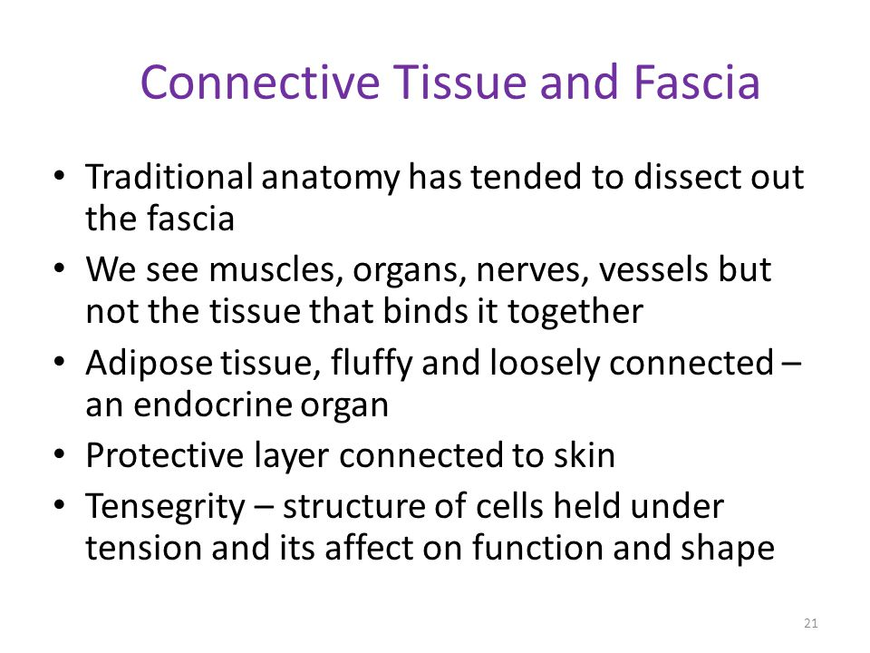 Connective Tissue and Fascia Traditional anatomy has tended to dissect out the fascia We see muscles, organs, nerves, vessels but not the tissue that
