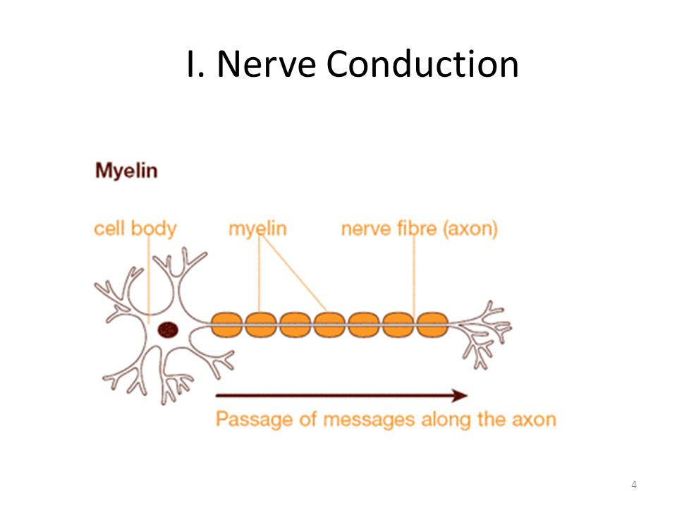 I. Nerve Conduction 4