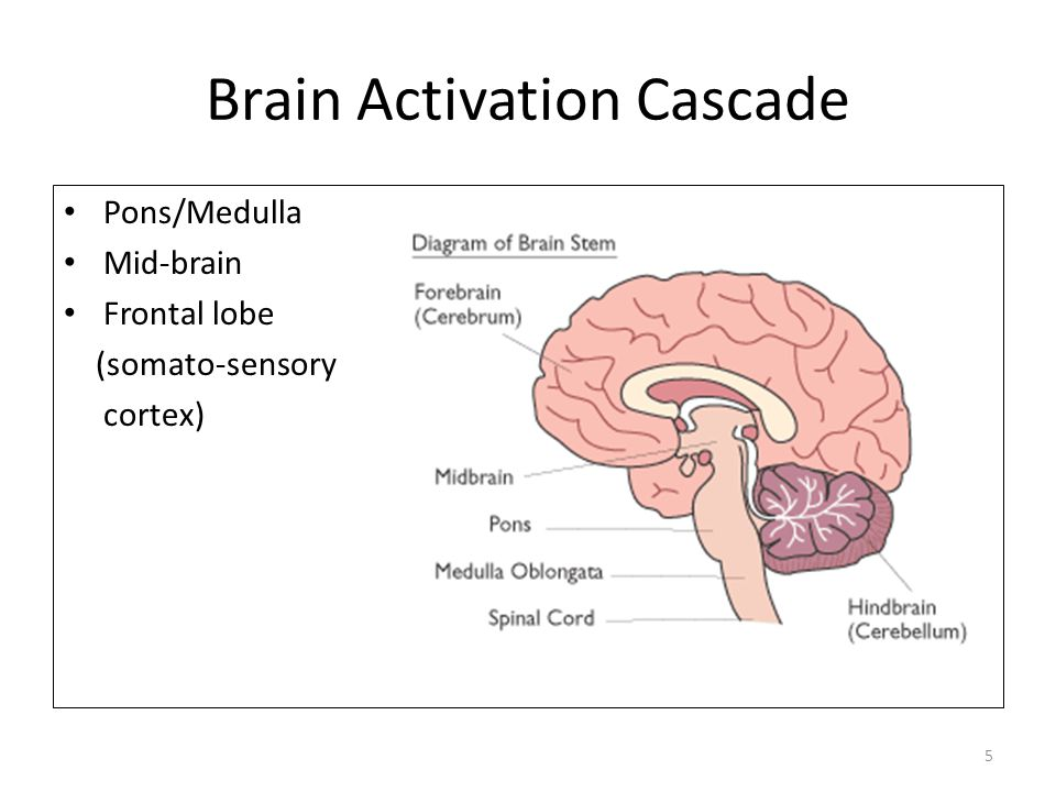 Brain Activation Cascade Pons/Medulla Mid-brain Frontal lobe (somato-sensory cortex) 5