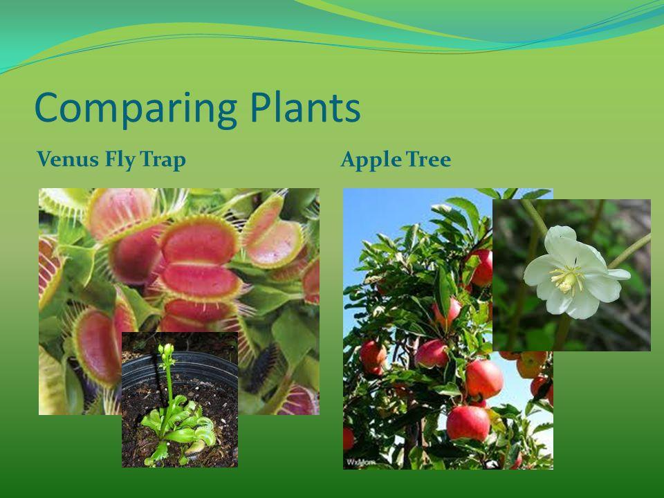 Comparing Plants Venus Fly Trap Apple Tree
