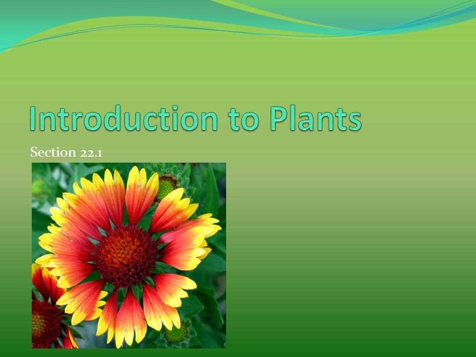 Tropisms Phototropism Plants will always grow towards a light source.