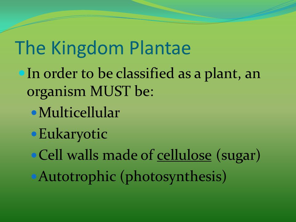 The Kingdom Plantae In order to be classified as a plant, an organism MUST be: Multicellular Eukaryotic Cell walls made of cellulose (sugar) Autotroph