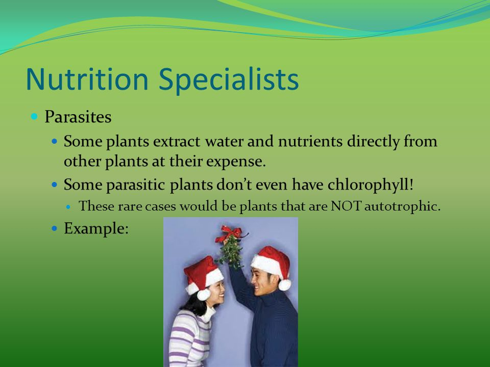 Nutrition Specialists Parasites Some plants extract water and nutrients directly from other plants at their expense. Some parasitic plants don't even