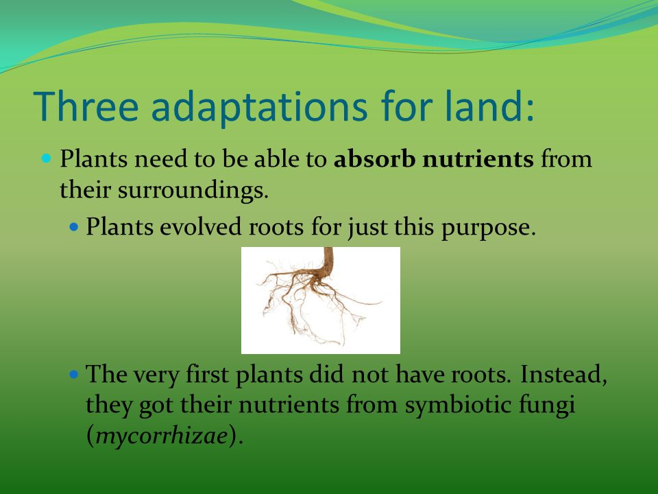 Three adaptations for land: Plants need to be able to absorb nutrients from their surroundings. Plants evolved roots for just this purpose. The very f