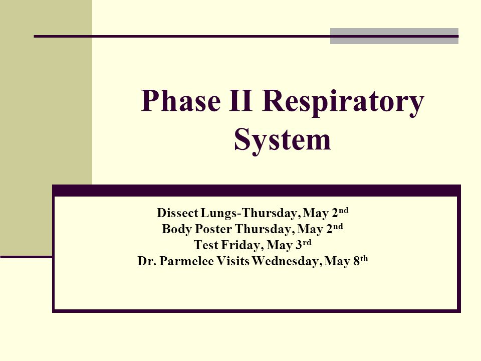 Phase II Respiratory System Dissect Lungs-Thursday, May 2 nd Body Poster Thursday, May 2 nd Test Friday, May 3 rd Dr. Parmelee Visits Wednesday, May 8