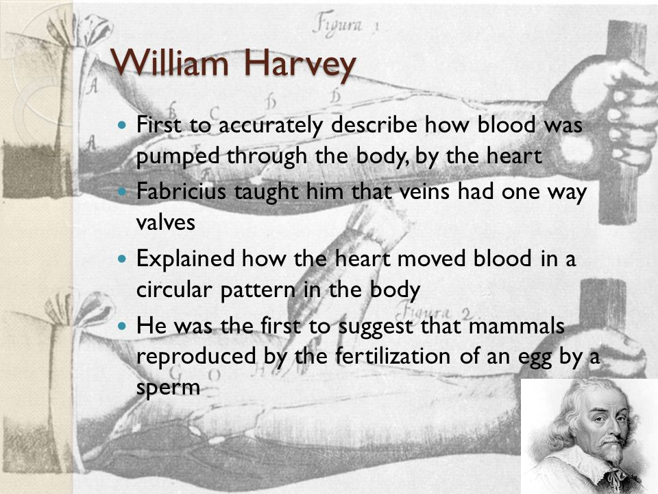 William Harvey First to accurately describe how blood was pumped through the body, by the heart Fabricius taught him that veins had one way valves Explained how the heart moved blood in a circular pattern in the body He was the first to suggest that mammals reproduced by the fertilization of an egg by a sperm