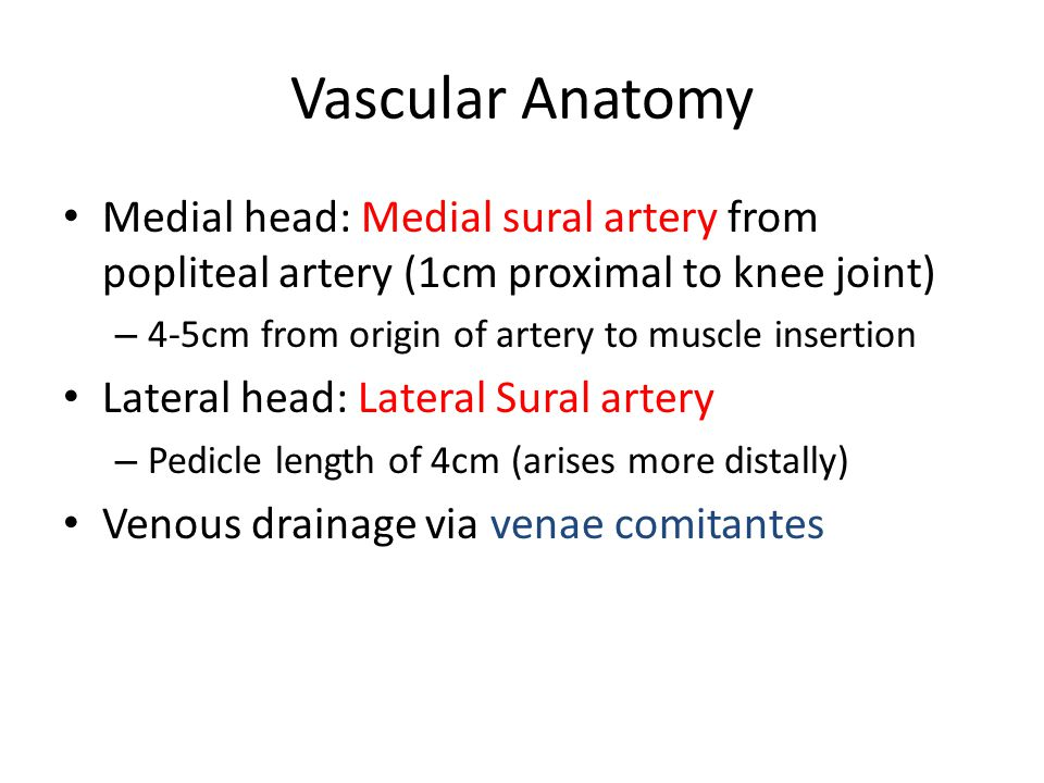 Vascular Anatomy Medial head: Medial sural artery from popliteal artery (1cm proximal to knee joint) – 4-5cm from origin of artery to muscle insertion Lateral head: Lateral Sural artery – Pedicle length of 4cm (arises more distally) Venous drainage via venae comitantes