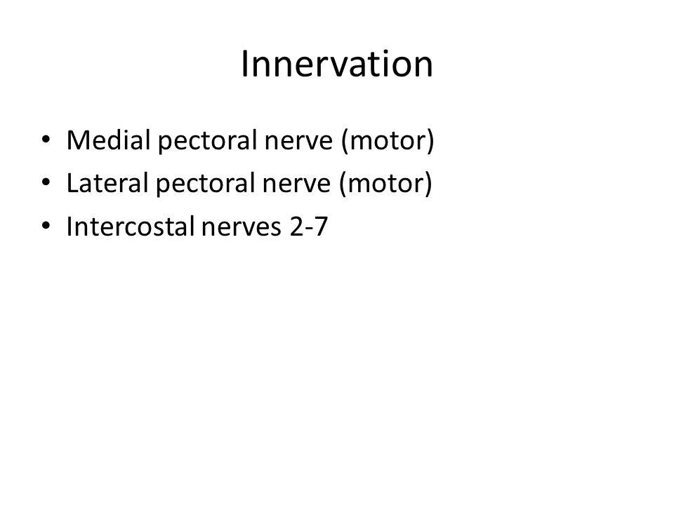 Innervation Medial pectoral nerve (motor) Lateral pectoral nerve (motor) Intercostal nerves 2-7