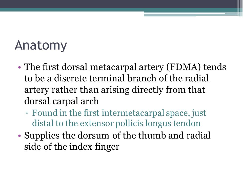 Anatomy The first dorsal metacarpal artery (FDMA) tends to be a discrete terminal branch of the radial artery rather than arising directly from that dorsal carpal arch ▫Found in the first intermetacarpal space, just distal to the extensor pollicis longus tendon Supplies the dorsum of the thumb and radial side of the index finger