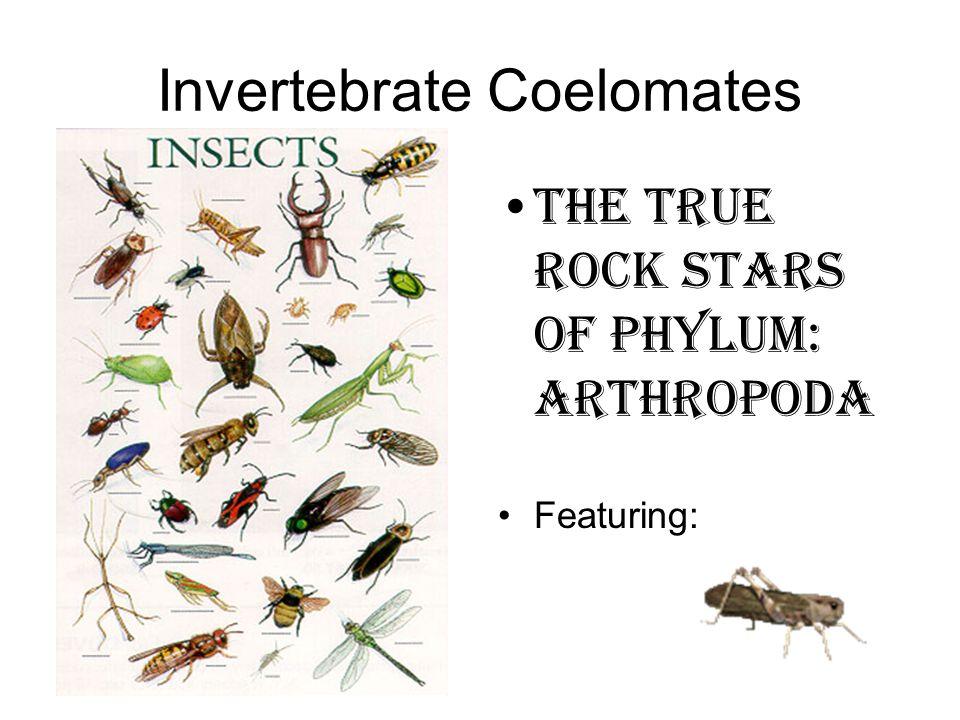 Invertebrate Coelomates The true rock stars of Phylum: Arthropoda Featuring: