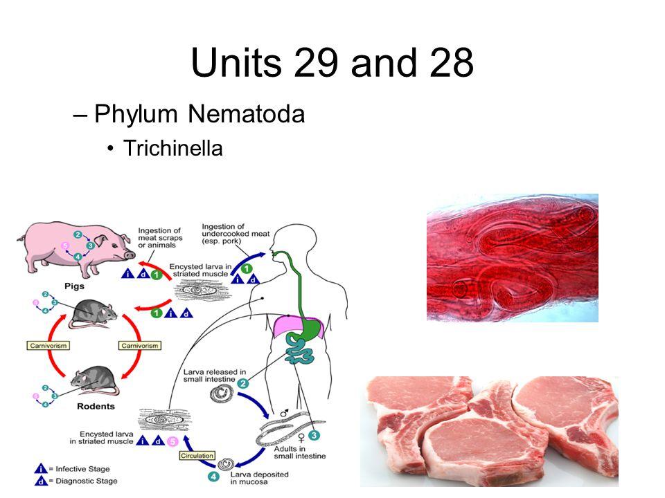 Units 29 and 28 –Phylum Nematoda Trichinella