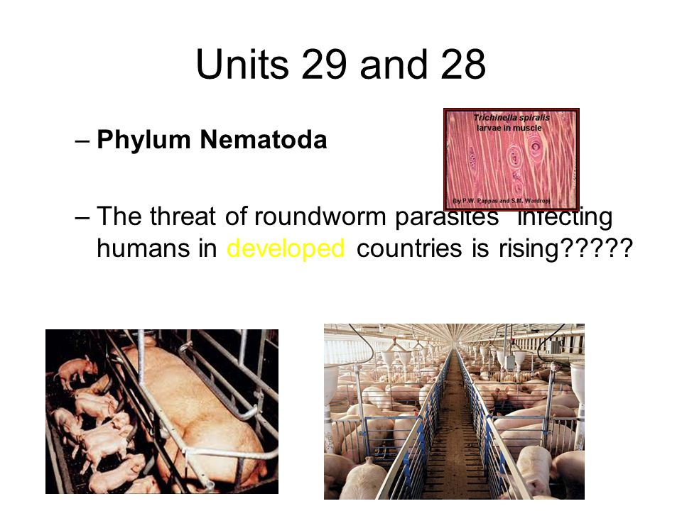Units 29 and 28 –Phylum Nematoda –The threat of roundworm parasites infecting humans in developed countries is rising