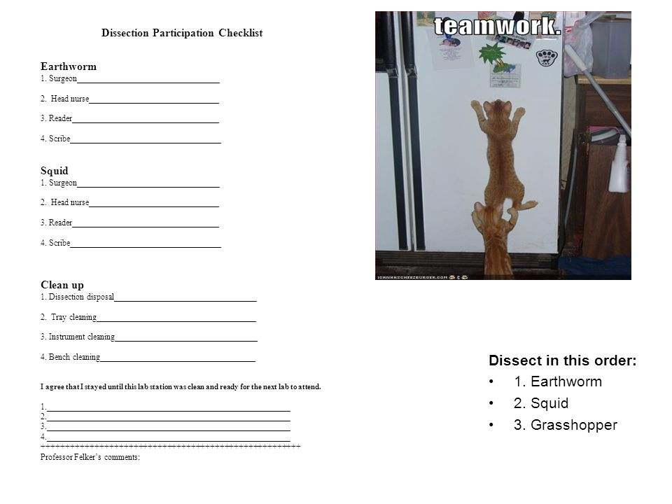 Dissection Participation Checklist Earthworm 1. Surgeon__________________________________ 2. Head nurse_______________________________ 3. Reader______