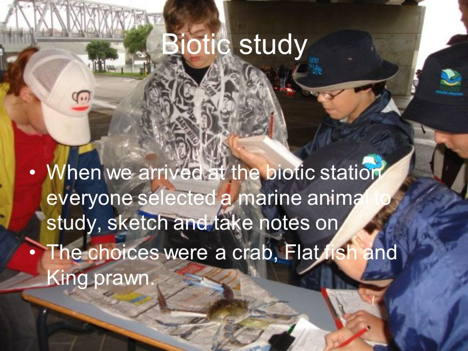 Biotic study When we arrived at the biotic station everyone selected a marine animal to study, sketch and take notes on.