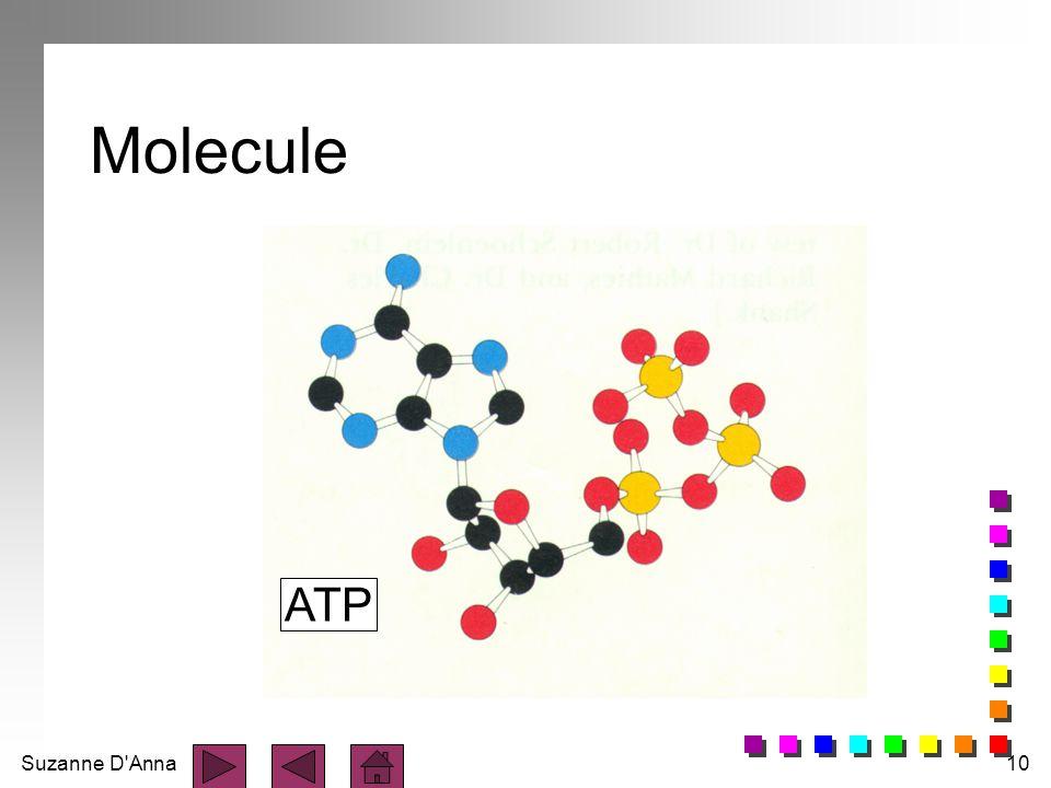 Suzanne D'Anna10 Molecule ATP