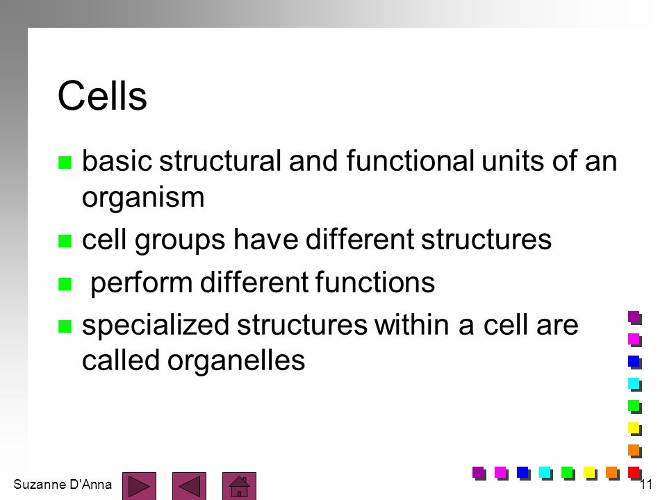 Suzanne D'Anna11 Cells n basic structural and functional units of an organism n cell groups have different structures n perform different functions n