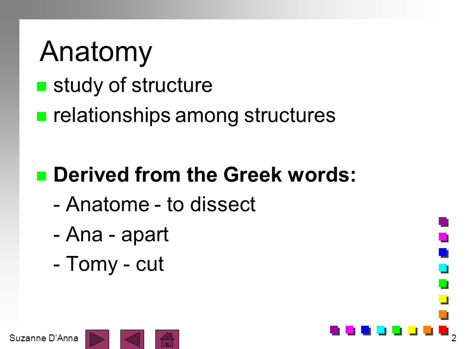 Suzanne D'Anna2 Anatomy n study of structure n relationships among structures n Derived from the Greek words: - Anatome - to dissect - Ana - apart - T