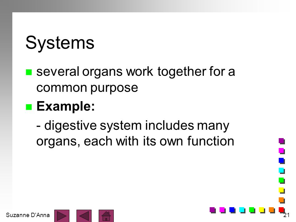 Suzanne D'Anna21 Systems n several organs work together for a common purpose n Example: - digestive system includes many organs, each with its own fun