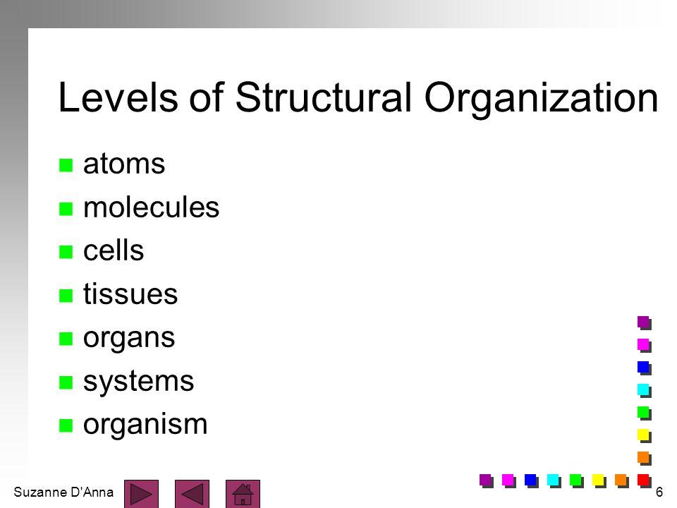 Suzanne D'Anna6 Levels of Structural Organization n atoms n molecules n cells n tissues n organs n systems n organism