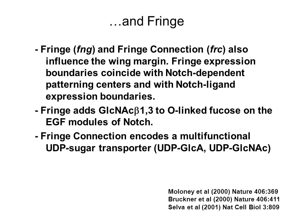 …and Fringe - Fringe (fng) and Fringe Connection (frc) also influence the wing margin.