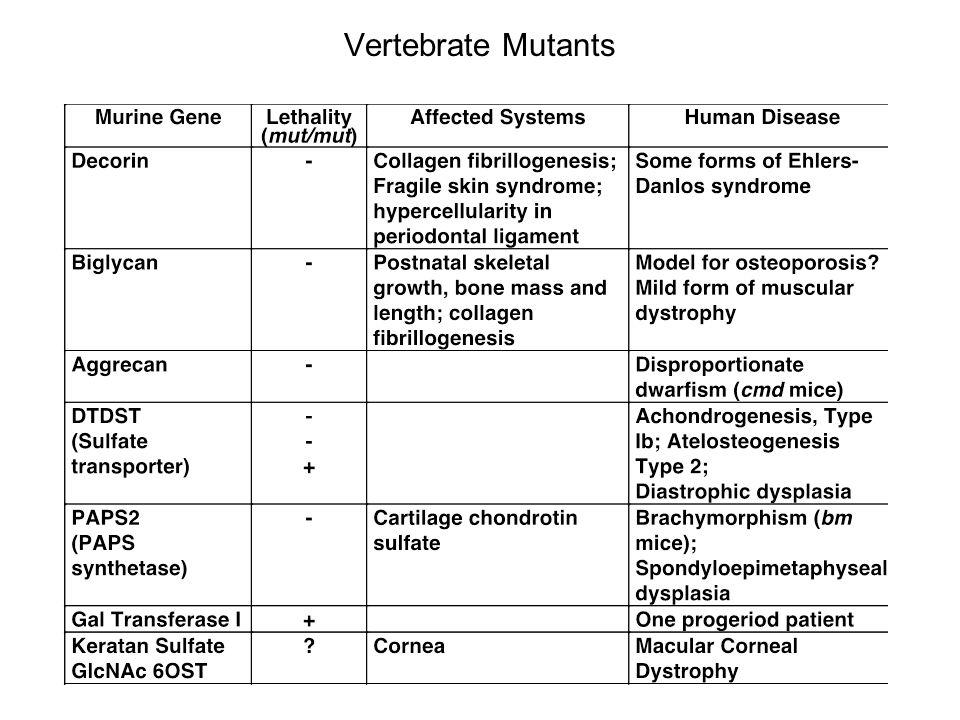 Vertebrate Mutants