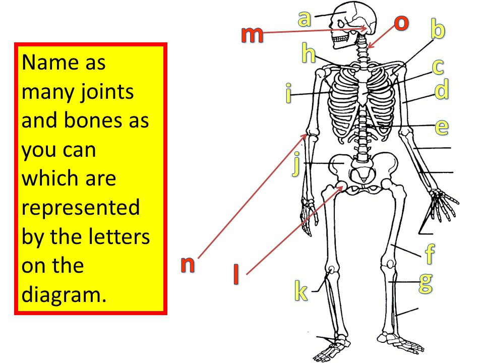 Name as many joints and bones as you can which are represented by the letters on the diagram.