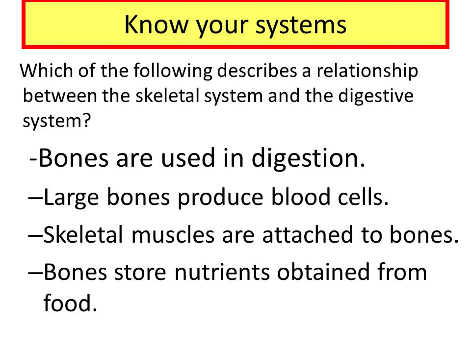 Know your systems Which of the following describes a relationship between the skeletal system and the digestive system? -Bones are used in digestion.