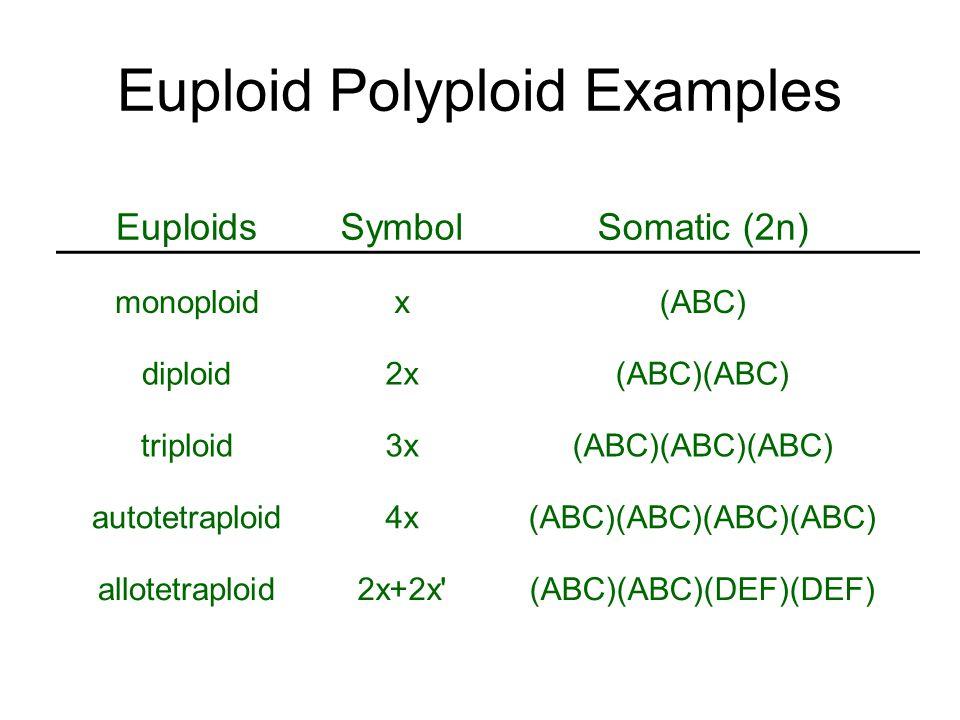 Euploid Polyploid Examples EuploidsSymbolSomatic (2n) monoploidx(ABC) diploid2x(ABC)(ABC) triploid3x(ABC)(ABC)(ABC) autotetraploid4x(ABC)(ABC)(ABC)(AB
