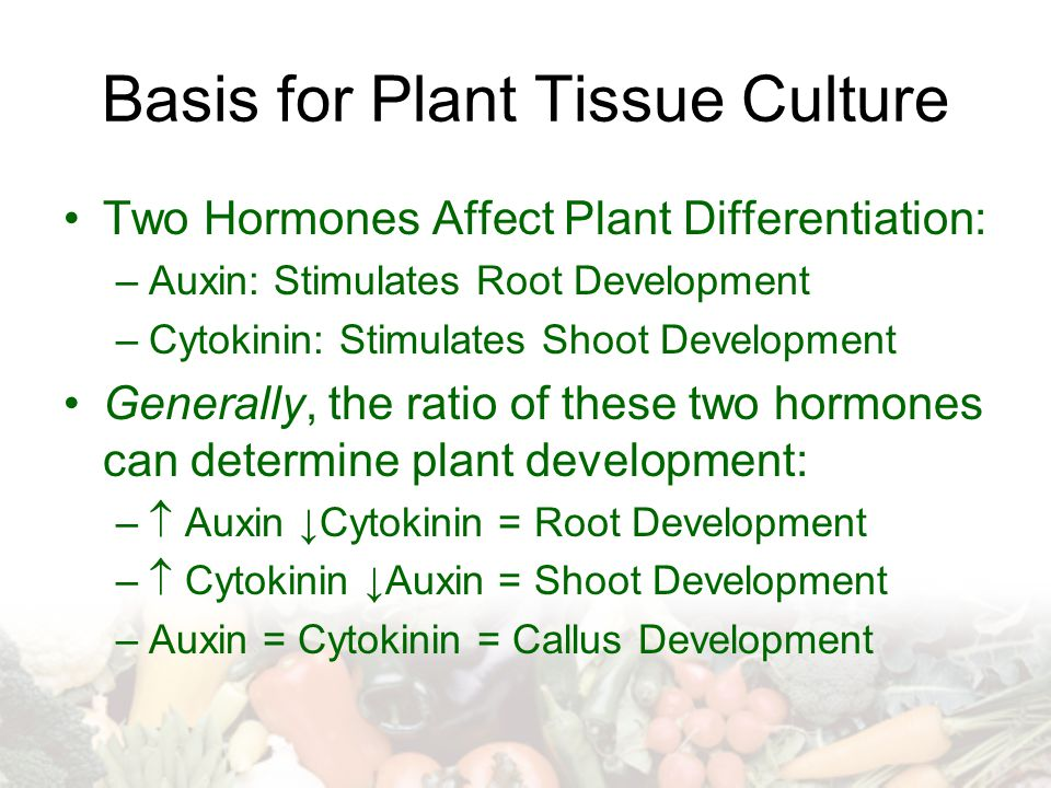 Basis for Plant Tissue Culture Two Hormones Affect Plant Differentiation: –Auxin: Stimulates Root Development –Cytokinin: Stimulates Shoot Development