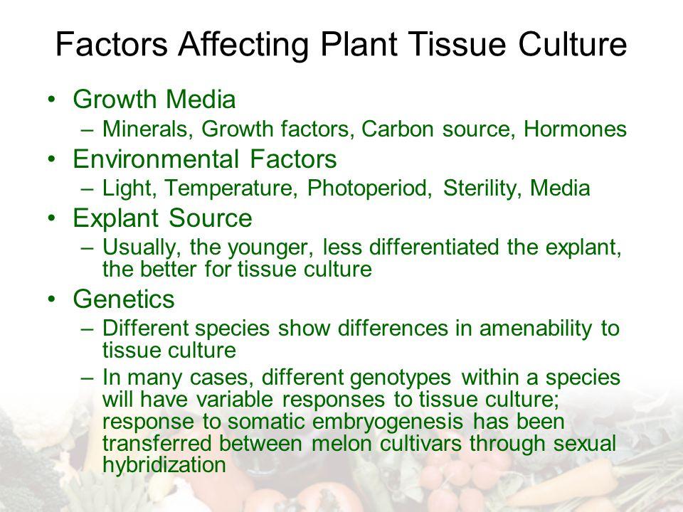 Factors Affecting Plant Tissue Culture Growth Media –Minerals, Growth factors, Carbon source, Hormones Environmental Factors –Light, Temperature, Phot