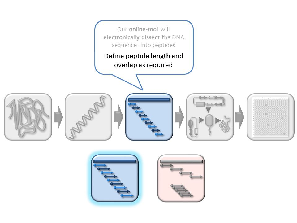 Our online-tool will electronically dissect the DNA sequence into peptides Define peptide length and overlap as required