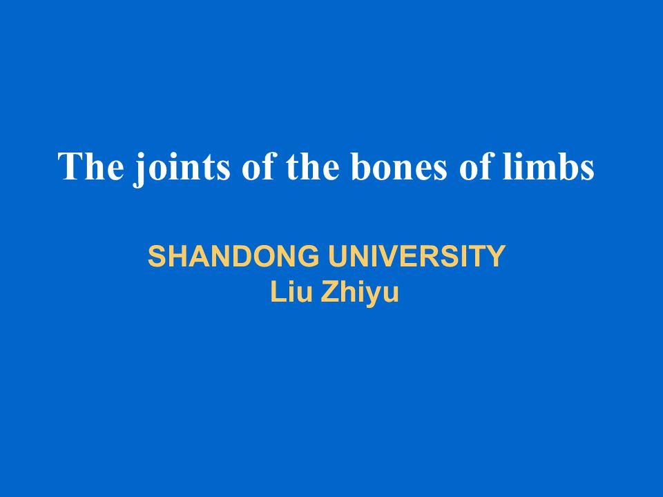 The joints of the bones of limbs SHANDONG UNIVERSITY Liu Zhiyu
