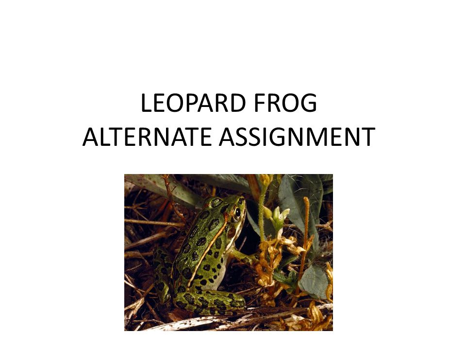 LOTS OF VIDEOS Click on thumbnails for frog behavior videos GET WORKSHEET AND FILL OUT YOUR OBSERVATIONS