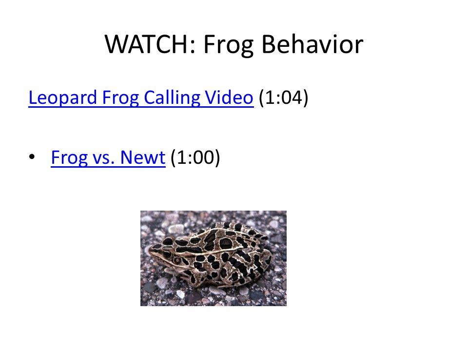 WATCH: Frog Behavior Leopard Frog Calling VideoLeopard Frog Calling Video (1:04) Frog vs. Newt (1:00)Frog vs. Newt