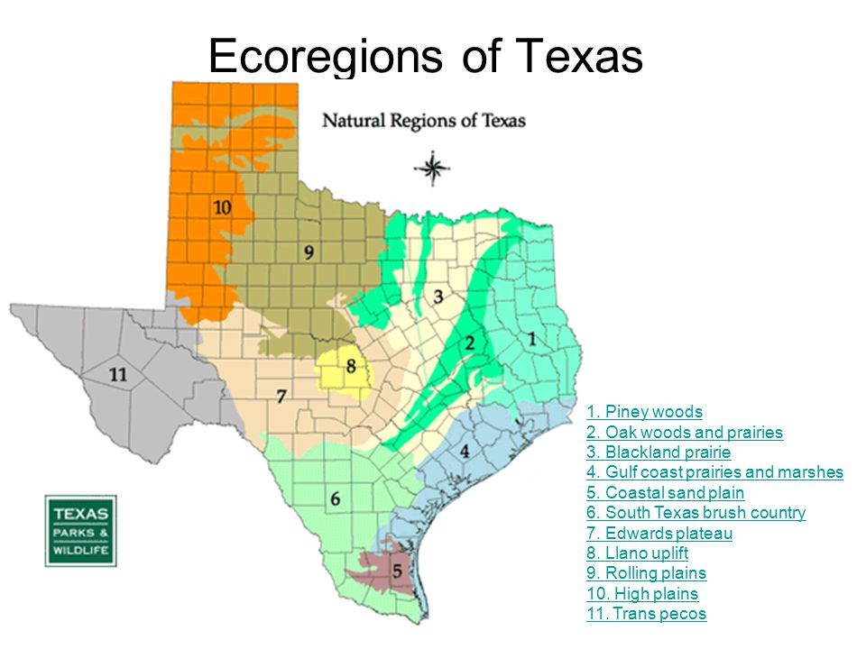 Ecoregions of Texas Notes - ThingLink